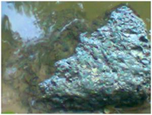 মাশাজান দীঘির পানির নিচের একটি পাথরের ছবি।